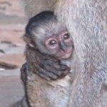 Sweet monkeys that roamed the grounds