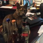 Cleopatra, our Spirited Cat hard at work in the office