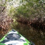 Our Eco Tours are an adventure into Florida's Back Country Essturaries