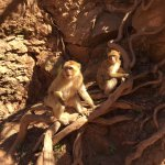 Monkeys at the Ouzoud Falls