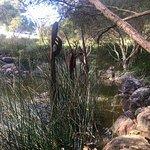 Foto de Kings Park y Jardín Botánico
