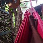Photo de Jacaranda Hotel and Jungle Garden