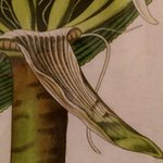 Botanical picture detail from the Trianon Old Naples