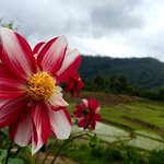 Photo of Ecolodge Bukit Lawang