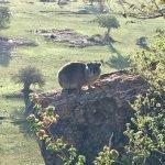 Photo of Lobo Wildlife Lodge