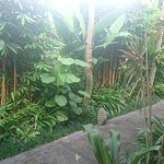 Inata Hotel Monkey Forest Foto