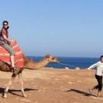 Camel ride(Tangier's outskiers near the caves of Hercules)