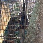 Foto de Zoological Park of Centenario ( Parque Zoologico del Centenario)