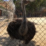 Zoological Park of Centenario ( Parque Zoologico del Centenario)
