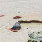 Sea eel came for lunch