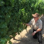 Examining the stalks and the pruning methods