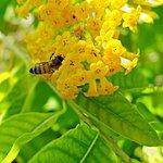 Foto de Port St Lucie Botanical Gardens
