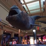 A Florida Right Whale hangs from the ceiling