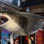 Photo de The Maritime Aquarium