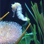 I took this pic of a cute seahorse!