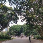 Nice shady trees