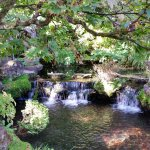 The Japanese Gardens at the Irish National Stud & Gardens