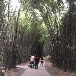 Bamboo forest in the park