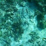 Snorkeling at Crocodile Island Boracay