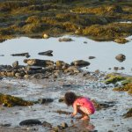 A young traveller exploring the Shore Path at low tide