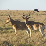 Nothing compares to seeing these animals in their natural habitat and the Masai Mara is just so