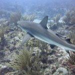 Prachtige ervaring te duiken met haaien om je heen.