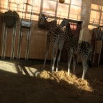 February trip to the Zoo