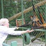Feeding the spider monkies