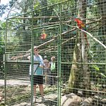In the cage with the red macaw
