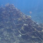 coral grid