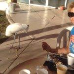 Птица пришла на завтрак