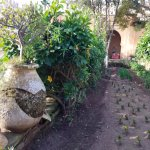 Kasbah gardens.