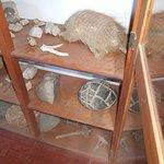 Vitrina con fósiles