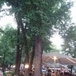 Under the trees on a warm summer's evening