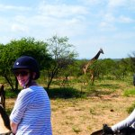 One of our many encounters with the giraffe