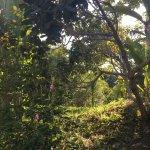 Photo of Tulemar Bungalows & Villas