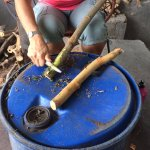 Our guide stripping bark of Ceylon cinnamon branches.