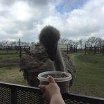 Foto de Bayou Wildlife Zoo