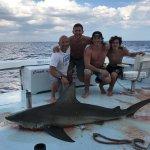 8 ft bull shark.