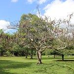 Foto de Royal Botanical Gardens
