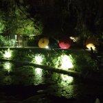 Night view of the garden