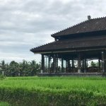 The restaurant in the rice paddies