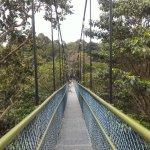 Foto di MacRitchie Nature Trail