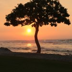 Beach Tree Bar and Lounge Foto