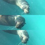Foto de Seal Swim Kaikoura