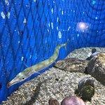 Aquarium of the National Marine Fisheries Bild