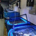 Foto de Aquarium of the National Marine Fisheries