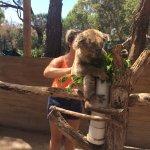 Petting the koala