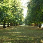 Bushy Park short walk away - avenues of chestnut trees
