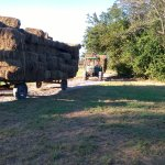 Baled hay coming in from the fields.
